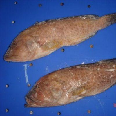 eef Cod (Epinephelus Chlorostigma)